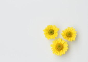 黄色の小菊3輪の背景