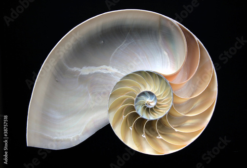 Leinwandbild Motiv Nautilus Spiral