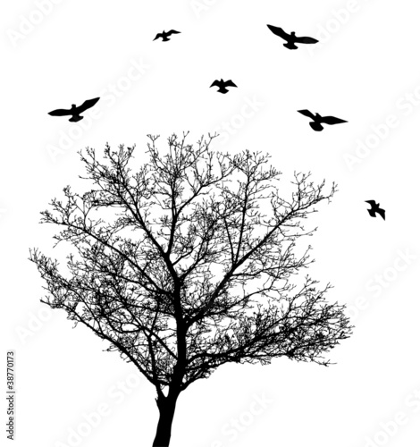 vector tree silhouette with birds - 38770173