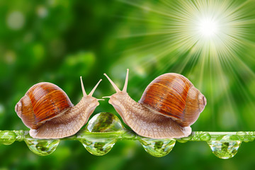 Funny picture of a love making snails couple.