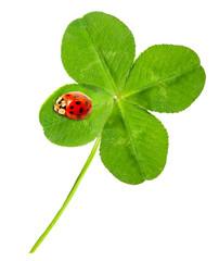 Green quarter-foil with ladybug.