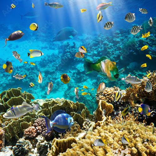 Obraz Coral colony and coral fish