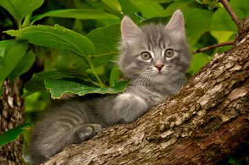 Gattino sull'albero