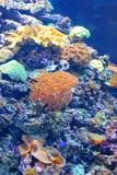 Fototapete Aquarium - Hintergrund - Koralenriff