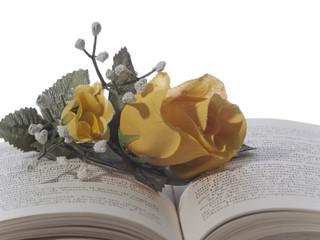 Rose gialle sopra un libro
