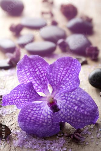 Fototapeten,kurort,orchidee,blume,die andere hochzeit