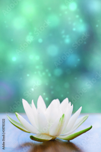 Staande foto Lotusbloem white water lilly flower