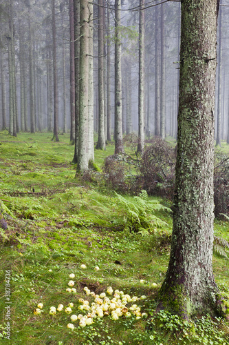 Foto op Canvas Bos in mist Laid out apples in the woods