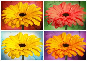 Collage Gerberas - grungelook gelbtöne