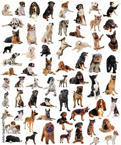 groupe de chiens de race