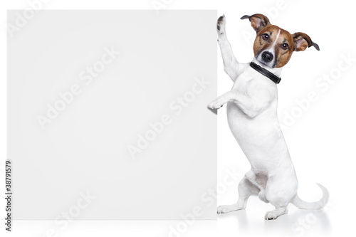 dog with white banner