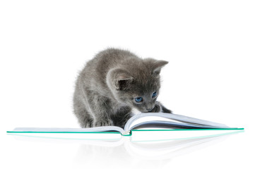 kitten and a book