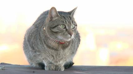 Cat on ledge