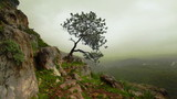 Stock Video Footage of a lone tree on a green, rocky hillside in Israel.