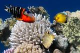 Fototapete Taucherfoto - Aquarium - Fische