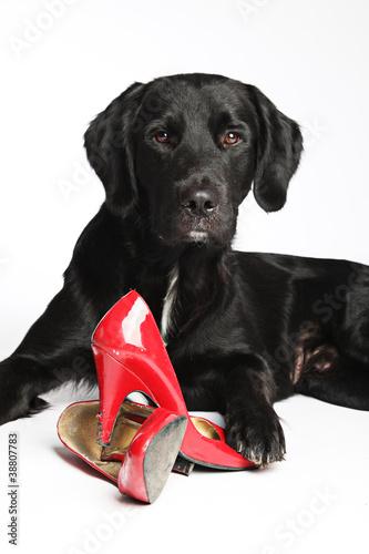 schwarzer Hund mit roten Schuhen