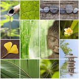 Collage Bouddha zen nature verte