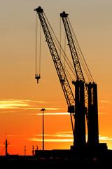 Coppia di gru al tramonto