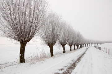Misty winter landscape in the Netherlands with a row of pollard