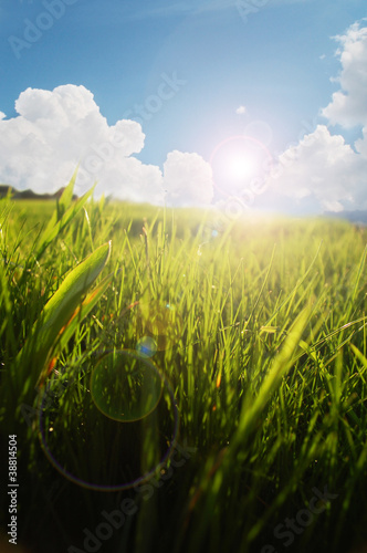 fresh grass in morning light