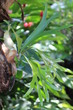 Guadeloupe - Jardin Botanique