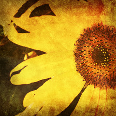 vintage sunflower photo