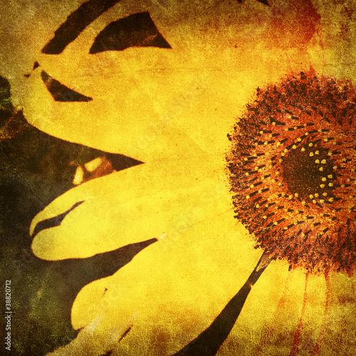 vintage sunflower photo