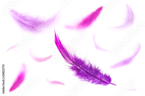 Purple Feathers