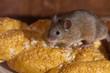 Leinwanddruck Bild - Mouse in the kitchen