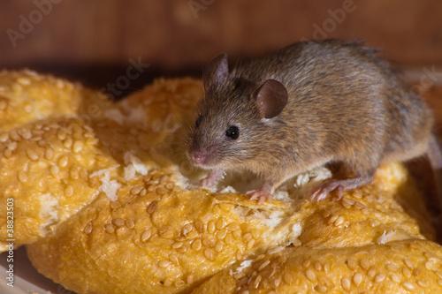 Leinwanddruck Bild Mouse in the kitchen