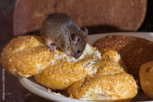 canvas print picture Mouse in the kitchen