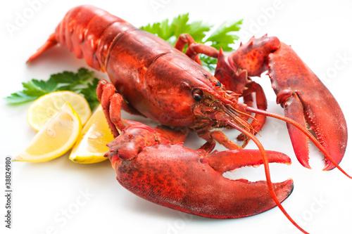 Fotobehang Schaaldieren Lobster