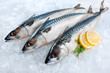 Mackerel fish on ice
