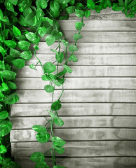 evergreen spread background