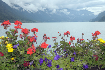 Geraniums and marigolds beside Lake Brienz
