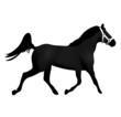 cheval étalon noir