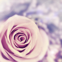 Dreamy rose abstract