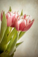 Texture - tulipani