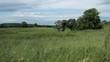 A field in a windy day in Ireland.