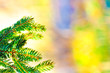 christmas fir tree on pastel background