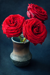 Beautiful red roses on a dark background