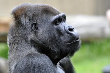 Primal Primate