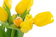 Toy chickens on yellow tulips isolated on white