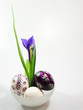 Iris flower in bowl with easter eggs