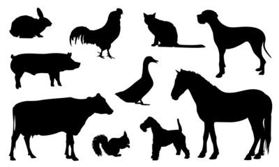 animali sagome