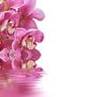 Fototapeten,orchid,wellness,wasser,blume