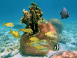 Hard coral with fishes