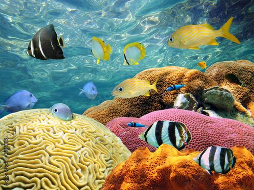 Aluminium Koraalriffen Underwater surface