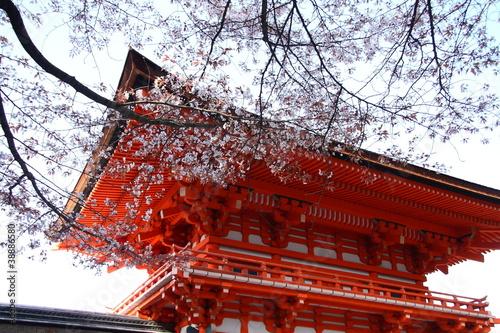 Plakat Świątynia japonais i cerisier fleuri wyborem Kioto