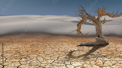 Dead Tree in Desert - 38891118